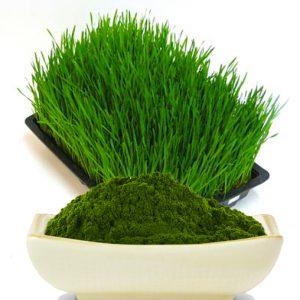 barleygrass3